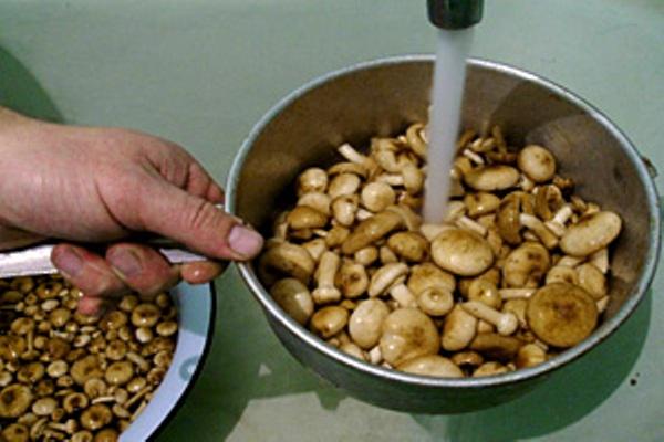 Сухие грибы хорошо очистить